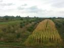 Pomicultura 155 pomi.Oar, 55 ari intabulat 5500 mp