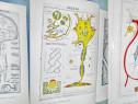 V. Miclaus- Sistem nervos in diafragme-Corelatii-Editura Med