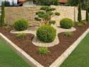 Avem diferite specii si dimensiuni la plante ornamentale