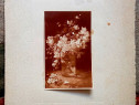 "Fotografie ""Flori de cires"", reproducere Grigorescu"