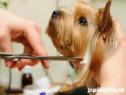 Curs acreditat cosmetica canina Targu Mures