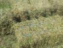 Baloți de lucernă