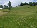 Teren Fundata, Brasov