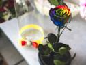 Trandafir criogenat Rainbow, 6,5 cm, in cupola de sticla
