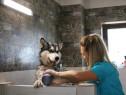 Curs Coafor Canin Bucuresti