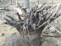 Decor, Rădăcină lemn