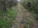 Berchez, teren un hectar livada cu pomi pe rod