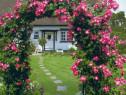 Arcada trandafiri/Pergola gradina plante cataratoare