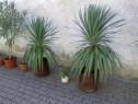 Plante ornamentale pentru curți, grădini, balcoane și terase