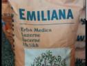 Seminte lucerna certificata import italia