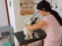 Cursuri de Coafor Canin Craiova