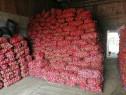 Cartofi consum rosu soiul esme