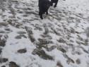 Adoptie câini Timișoara