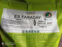 Sămânța porumb ES FARADAY