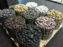 Piatra naturala - Pebble multicolor