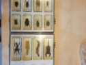 Insecte in cuburi de sticla/insectar
