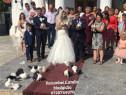 Închiriez Porumbei nunta