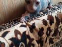 Fetiță sphinx!!!