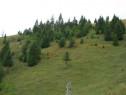 Negociere directă - teren 3274 mp Broșteni, SV