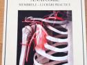 Medicina anatomie membrele g lupu