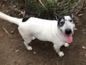 Adoptie Catel Boby, metis terrier