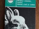 Iepurele Angora, animal pentru lana si carne / R3P2F