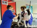 Cursuri de calificare coafor canin Targu Mures