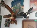 Trofee, animalule și păsări impaiate