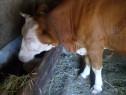 Vacă cu vițel