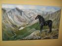 """Tablou""""Black beauty-singuraticul"""", pictura pe panza in ulei"""