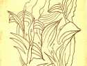 Flori de bruma de Constantin Caranfil