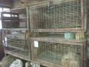 Custi pentru iepuri