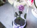 Trandafir criogenat Baby Lily, 6,5 cm, in cupola de sticla