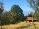 Casa + pământ 2.2 hectare Tebea,Hunedoara com. Baia de Cris