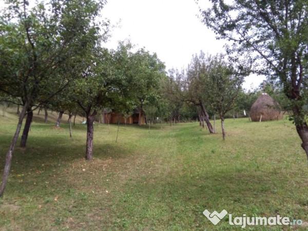 Vanzare  terenuri agricol  5000 mp Maramures, Tautii de Sus  - 4000000 EURO