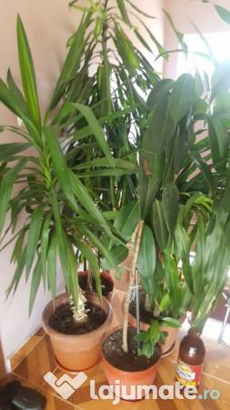 Plante de interior 150 ron for Plante de interior