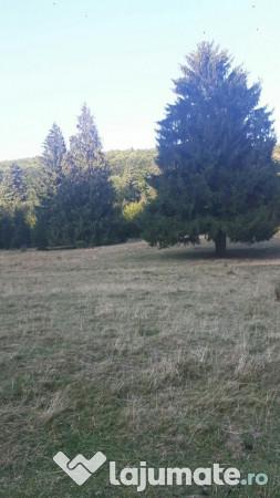 Vanzare  terenuri agricol  3500 mp Brasov, Cristian  - 24500 EURO