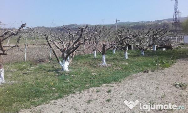 Vanzare  terenuri agricol  10.4 ha Bacau, Slobozia (Onesti)  - 156600 EURO